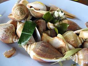 หอยชักตีน ที่คลองม่วง อร่อย