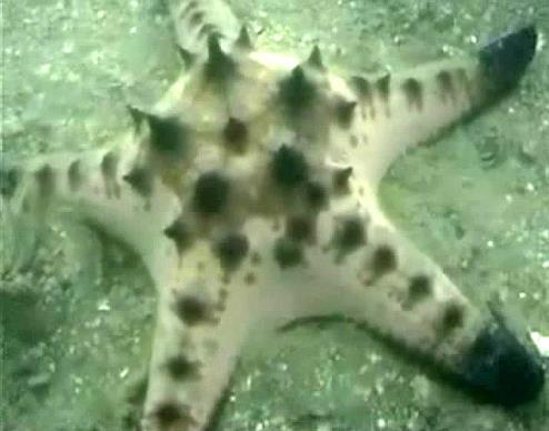 สำรวจปะการังเทียมใต้ทะเล กระบี่